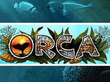 Игровые автоматы и игры Orca
