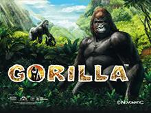 Автоматы Gorilla в онлайн казино